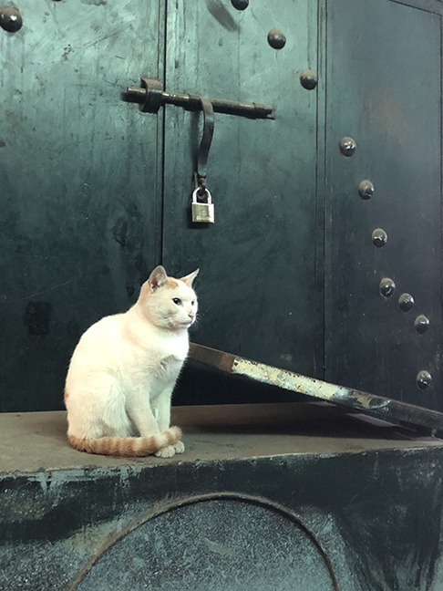 picture of a white cat with a orange tail that almost glows in front of a green/grey metal door